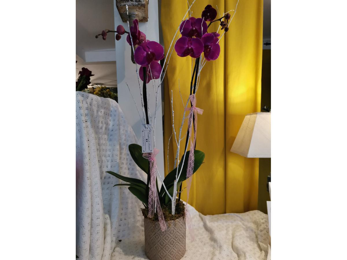 ORCHIDEE ET SON CACHE POT