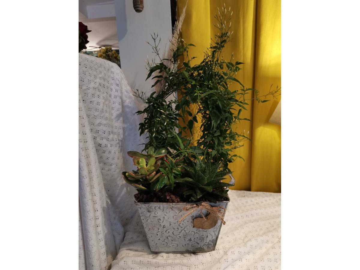 Jasmin et ses plantes grasses