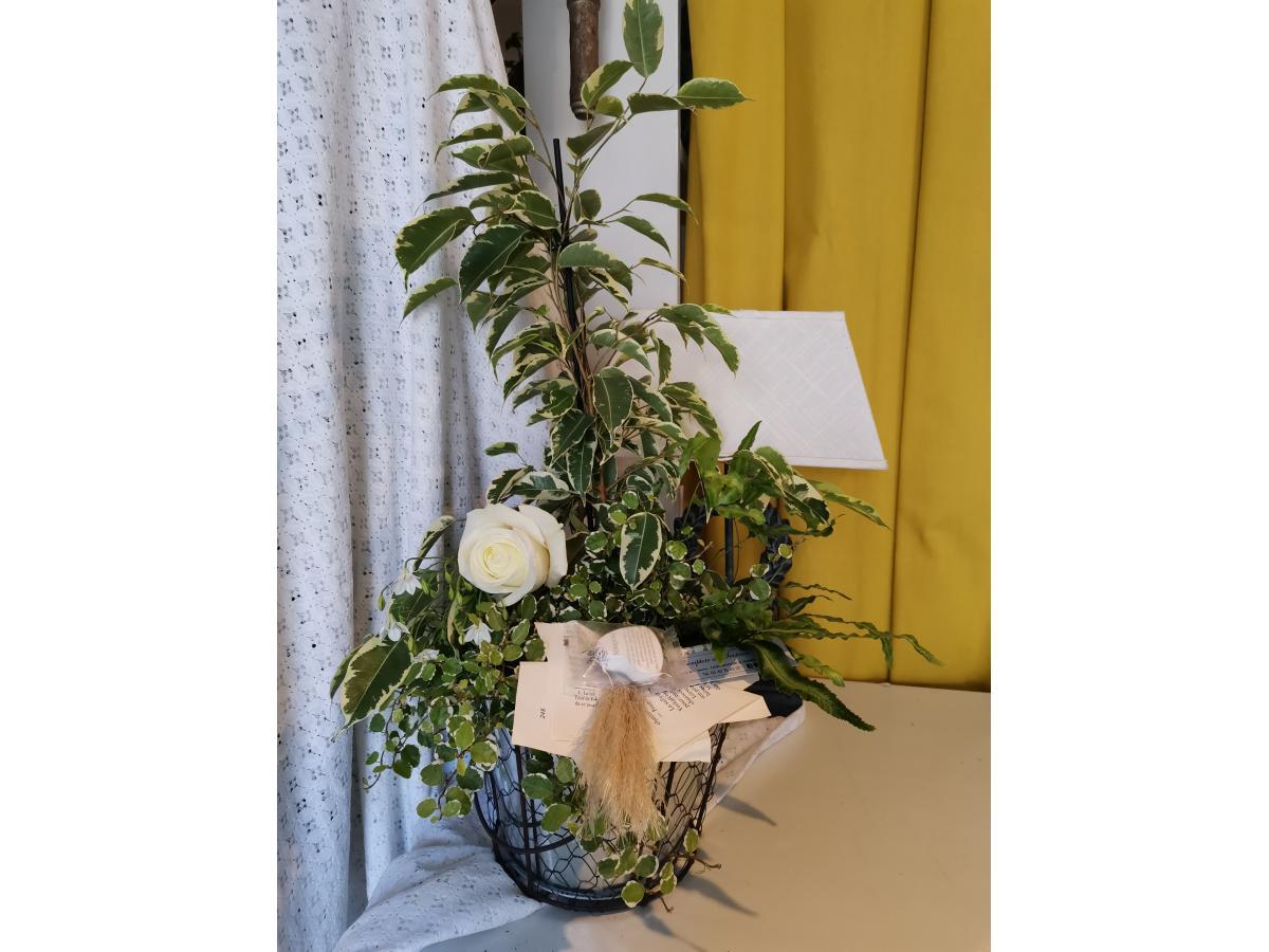 Assortiment de 3 plantes robustes style