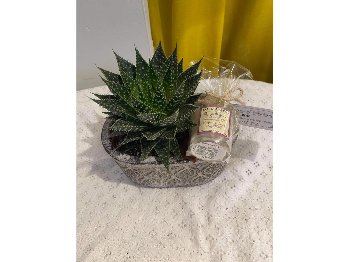 Aloe et sa bougie