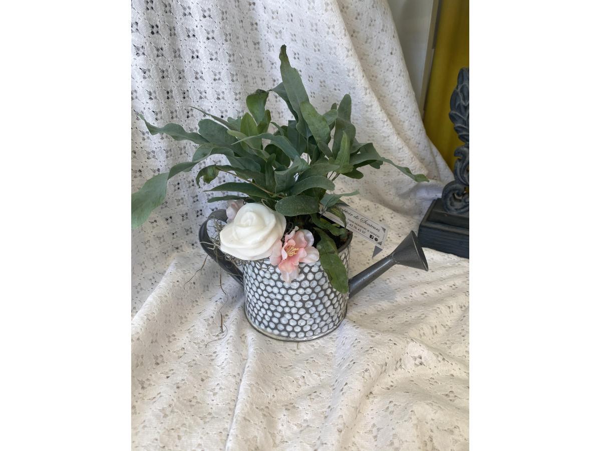 Plante verte Flobudium