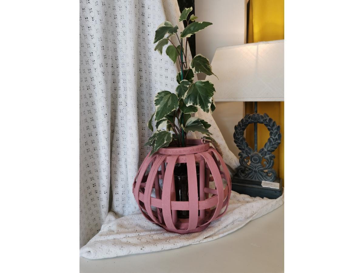 Lanterne et sa plante