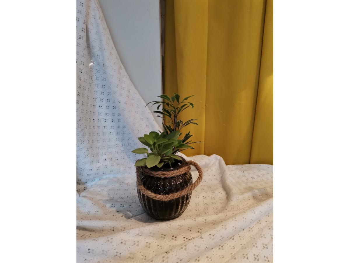 Petites plantes verrerie