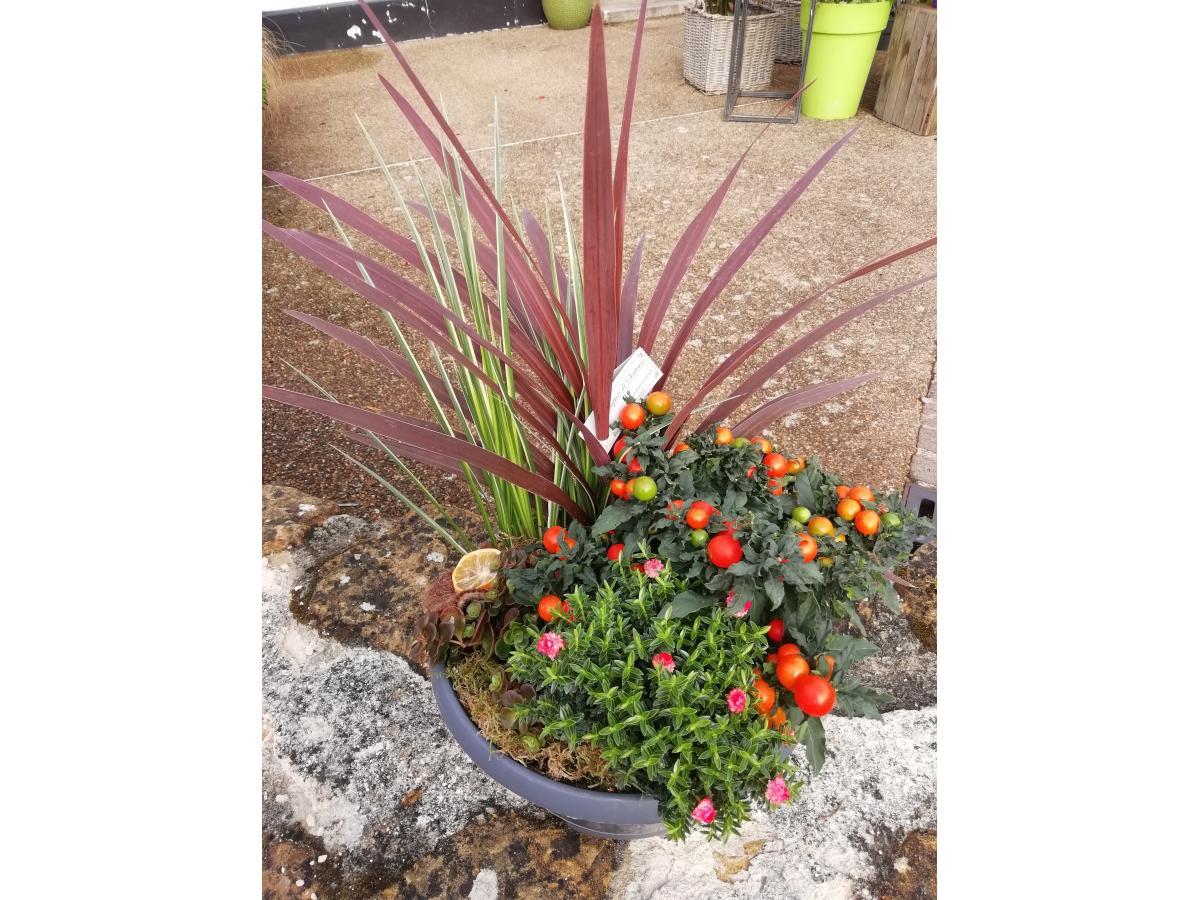 Mélange de 4 à 5 plantes extérieurs