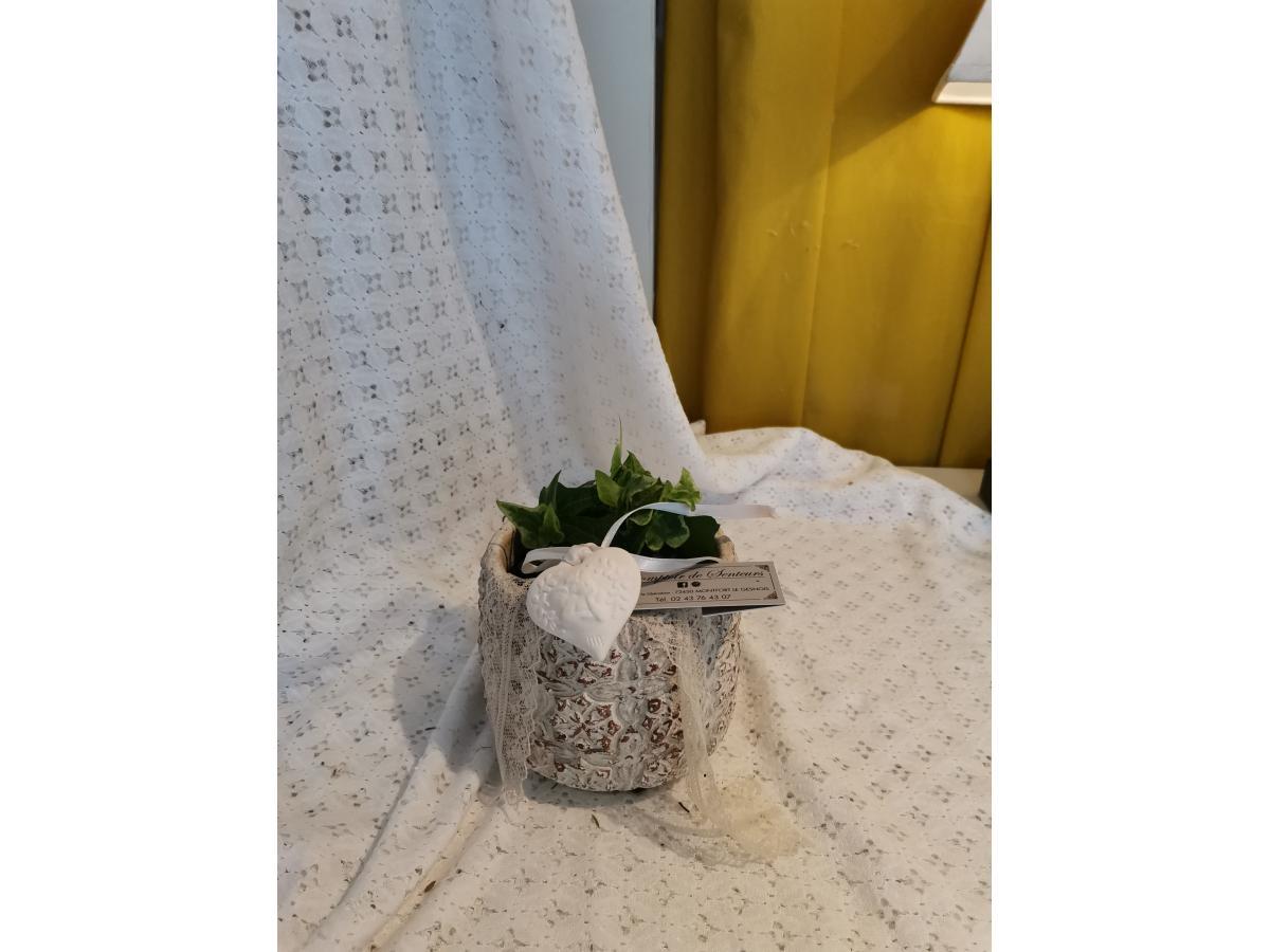 Lierre en poterie et son platre odorant