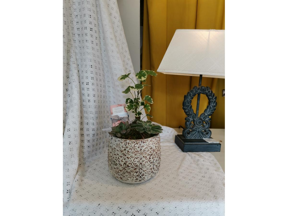 Divers Plantes + savon Mathilde M
