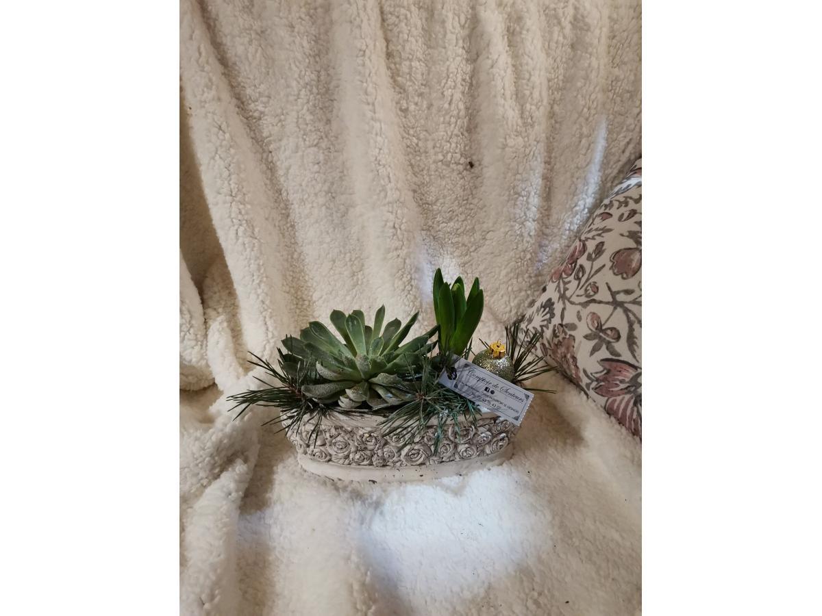 Jacinthe et plante grasse dans son cache pot