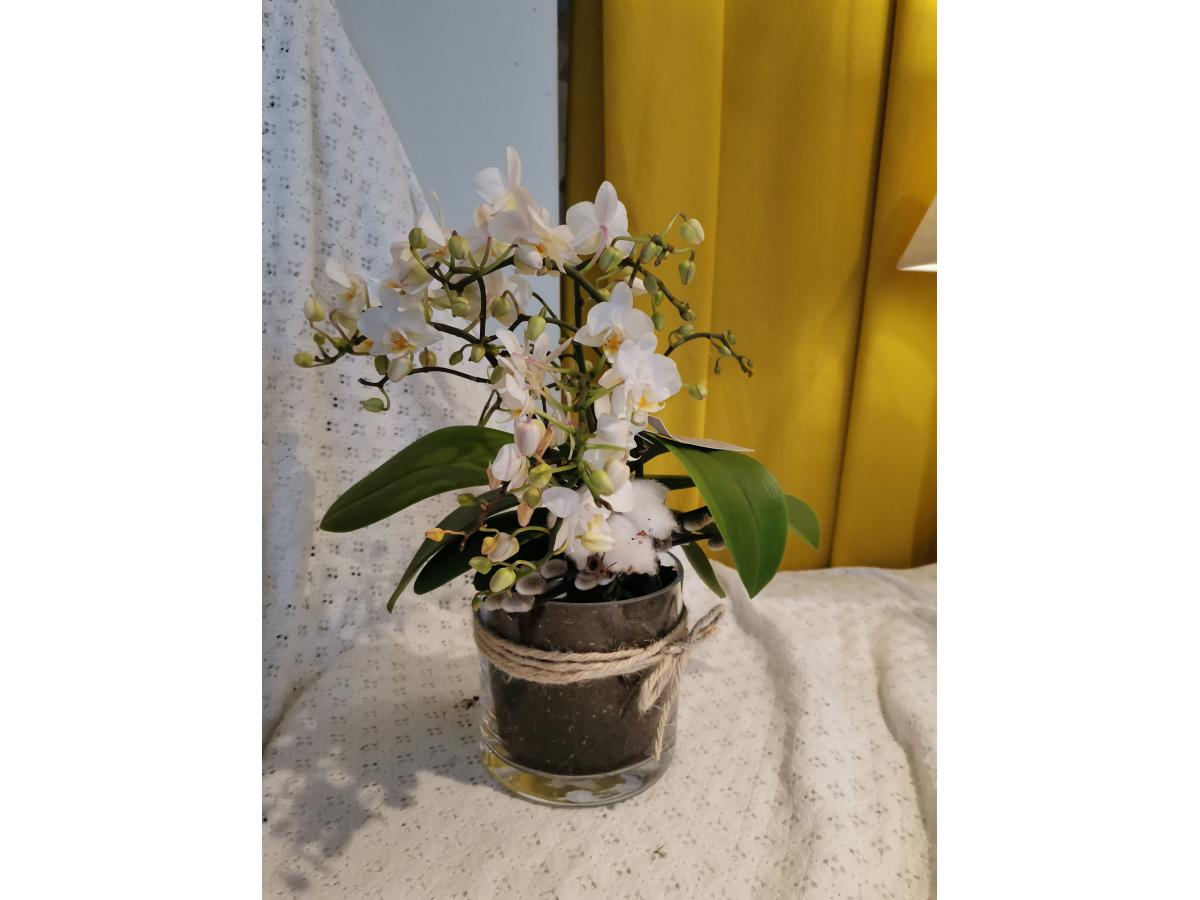 ORCHIDEE BLANCHE MEDIUM